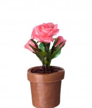 Карамельные розы в горшке