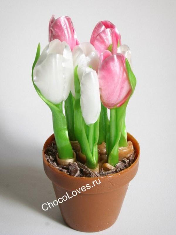 Карамельные тюльпаны в горшке